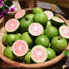 Unique taste of sweet guava
