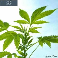 Arome weed