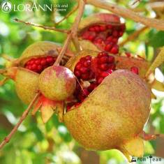Natural Pomegranate flavor