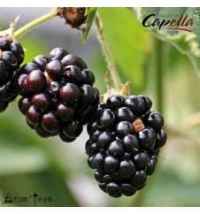 blackberry flavor