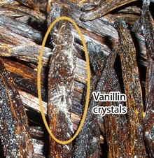 cristaux de vanille